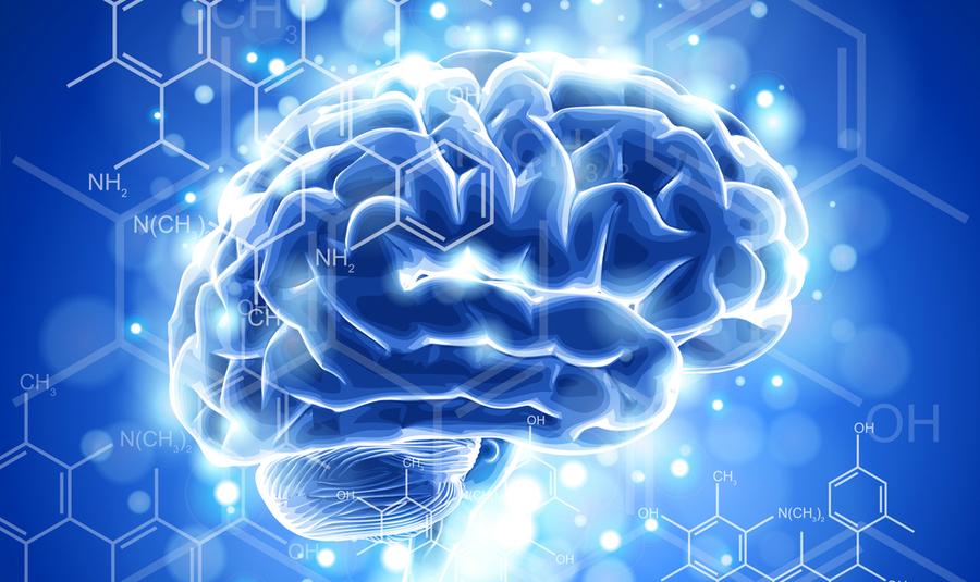 Top 10 hersenen brein